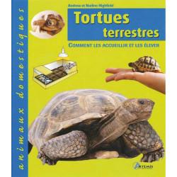 TARTARUGHE DI TERRA ANIMALI DOMESTICI
