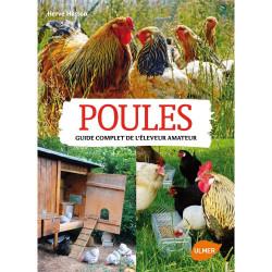 Polli, una guida completa per gli allevatori per hobby