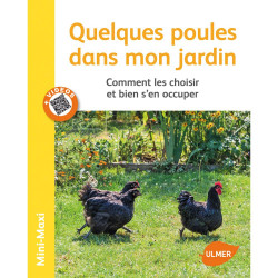 Alcuni polli nel mio giardino