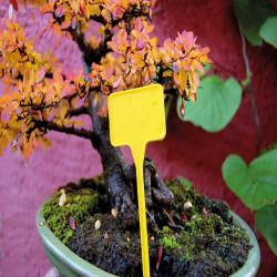 10 adesivi gialli da pungere